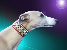 Hollywood Play It Again Sam Whippet Collar 2