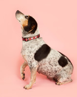 Valentines Hearts Collar is a sweet way to show how much you care for your dog Made in Greenville, SC.