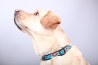 Chocolate Snow Cone Dog Collar-Argyle