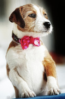 Bow Tie-Pink/Red Polka Dot