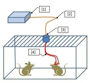 Optogenetics Toolkit for Free Moving Animals