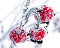 Cherries in the Snow Scent Shot (2 Pack)