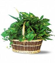 Medium Basket Dish Garden