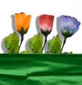 Color Changing & Floating Rose