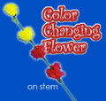 Color Changing Flower On Stem