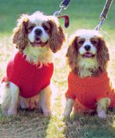 8ply Dog Coat