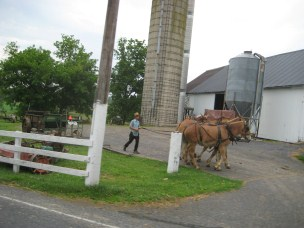Amish Man and horses