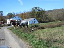 Amish Naomi's Horses