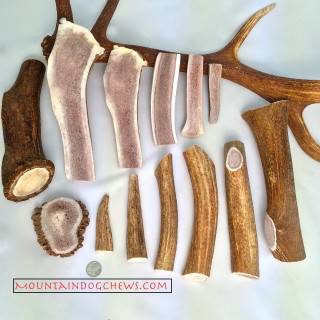 It's your choice, Elk Antlers by the pound!