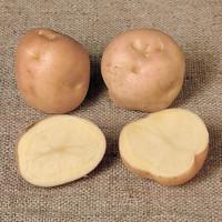Potato Epicure
