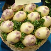 Kestral Potato