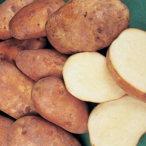 Golden Wonder Potato