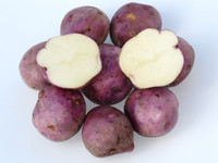 Arran victory Potato