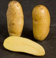 Mayan Gold Potato