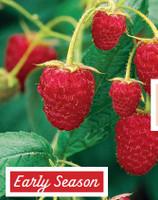 Raspberry Glen Cova