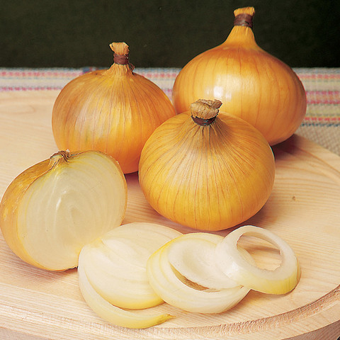 Onion Centurion