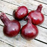Onion Karmen