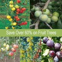 fruit Trees Ireland