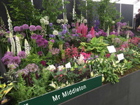 4 Mixed Plants Only €30 Save 25%