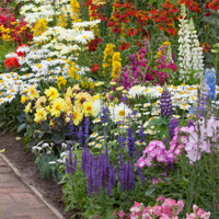 Spectacular Summer Flowering Perennials Collection