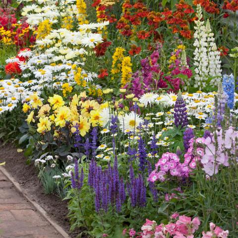 Spectacular Summer Flowering Perennials Collection