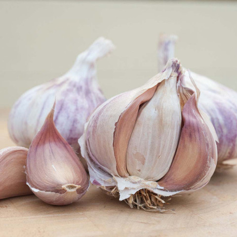French Garlic Germidour