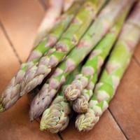Asparagus Guelph Millenium