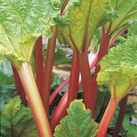 Rhubarb Livingstone