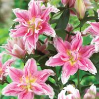 Rose Lily ® Natalia