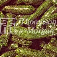 Courgette (Zucchini)
