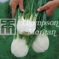 thompson and morgan seed ireland