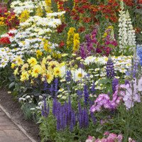 Spectacular Winter Hardy Perennials Collection