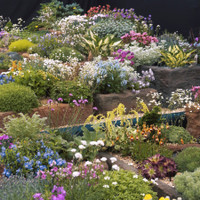 Rockery Plant Collection