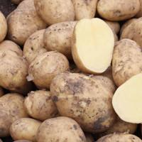 Markies Seed Potatoes