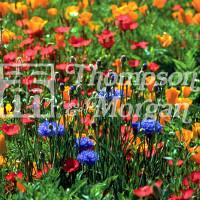 garden supplies ireland