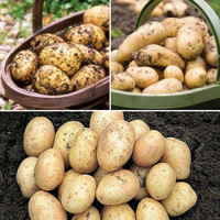irish poatoes