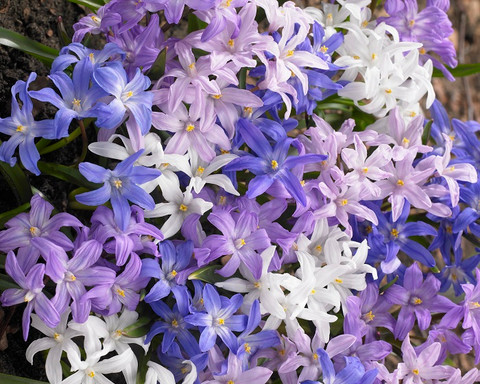 lawn stars mixed by mr middleton
