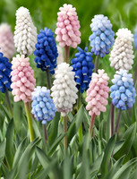 MUSCARI COLOUR CARPET by mr.middleton