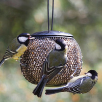 Bird Nutty Ball Mesh Peanut Feeder