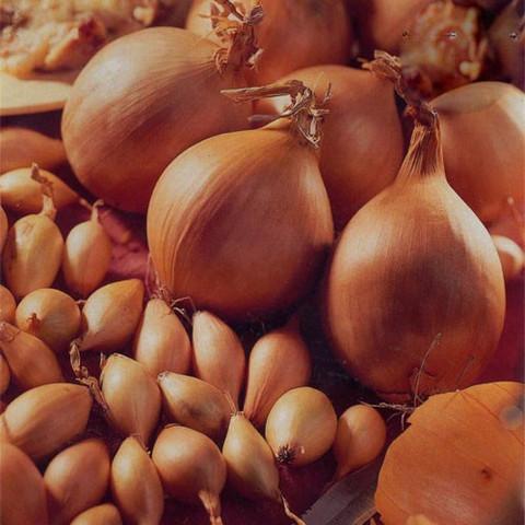 Onion Radar