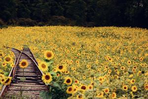 Sunshine Railroad