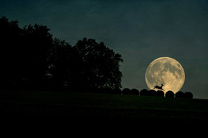 Deer Jumped Over The Moon