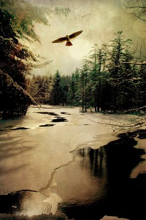 Adirondack Hawk