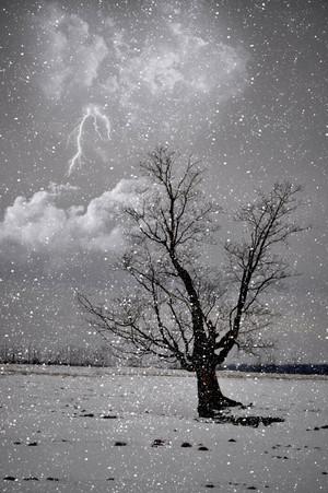 Strike In The Snow
