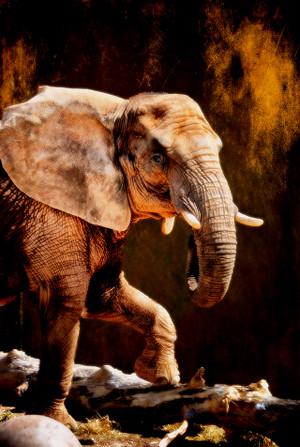 Elephant Grace