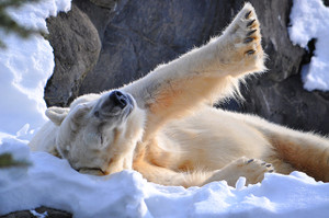 Polar Stretch