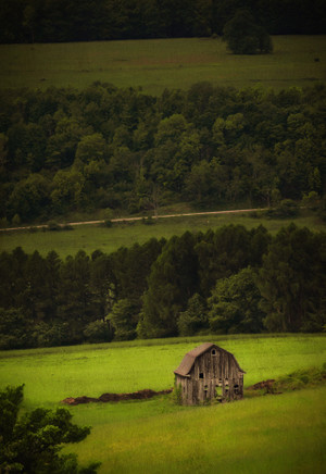Barn In Green