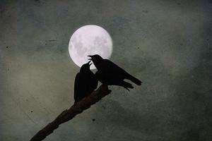 Crow Kisses
