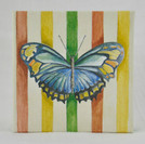 Small Gift Box - Striped Butterfly