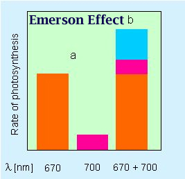 Emerson Effect Graph